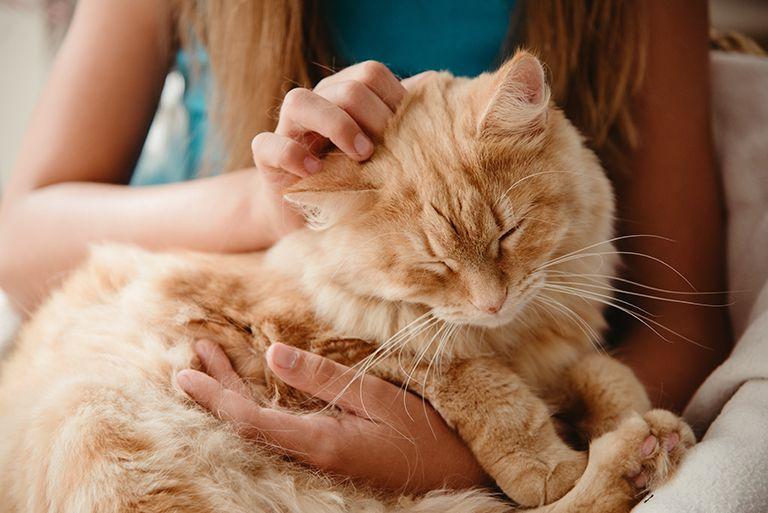 17 ідей що подарувати Кішці (Коту) на День Народження + Поради