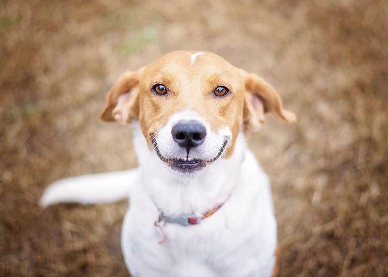 ТОП 21 ідея що подарувати Собаку на День Народження (або) +Поради